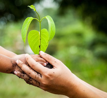 preview sustainability hands holding tree
